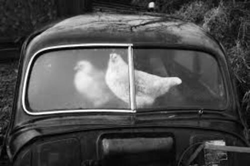 08 - Animals and cars