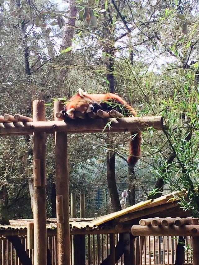 Suite Zoo La Palmyre.