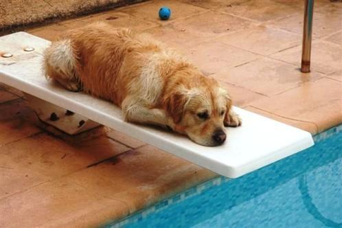 chien-plongeon.jpg