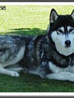 Lorca (2 ans)