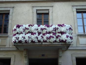 Les fleurs de l' été.