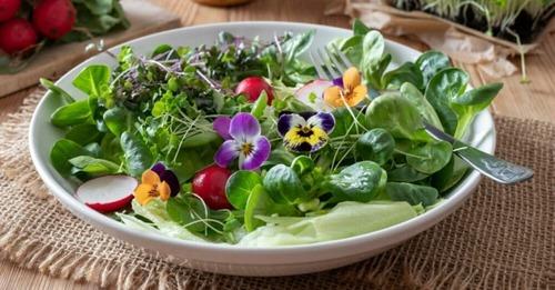 Plantes et fleurs comestibles