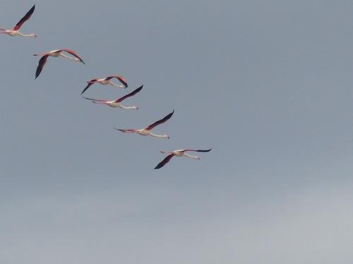 Oiseaux de Camargue