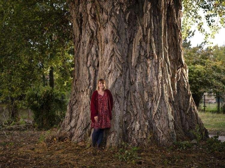 Élu arbre de l'année, ce peuplier géant sera-t-il épargné ?