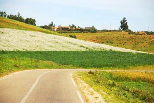 Fèves net céréales se partagent le terrain