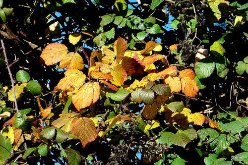 L'automne et les feuilles ...