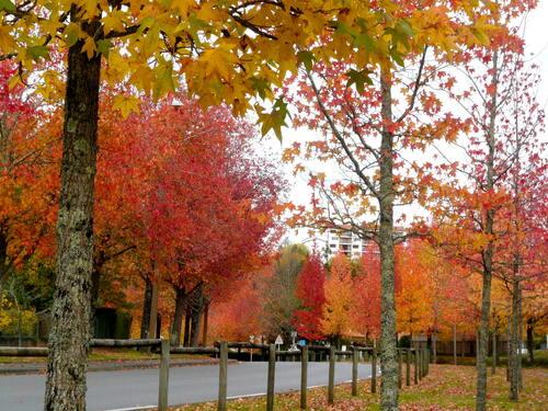 Couleurs d' automne