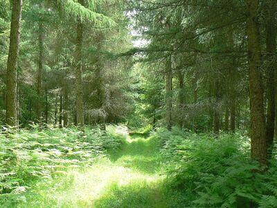 Le circuit du massif forestier