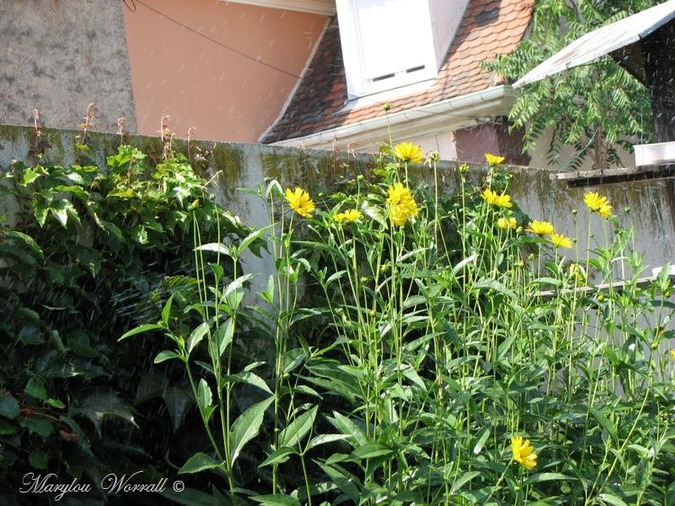 Ingersheim : Journée caniculaire