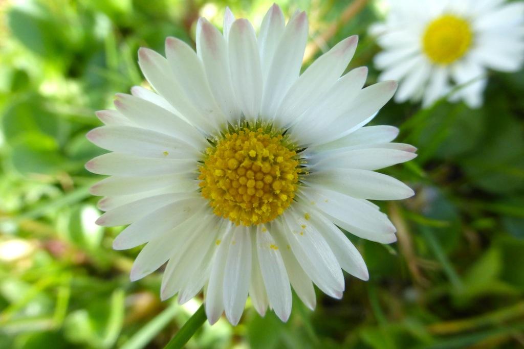 Et encore plus de fleurs, vive le printemps!