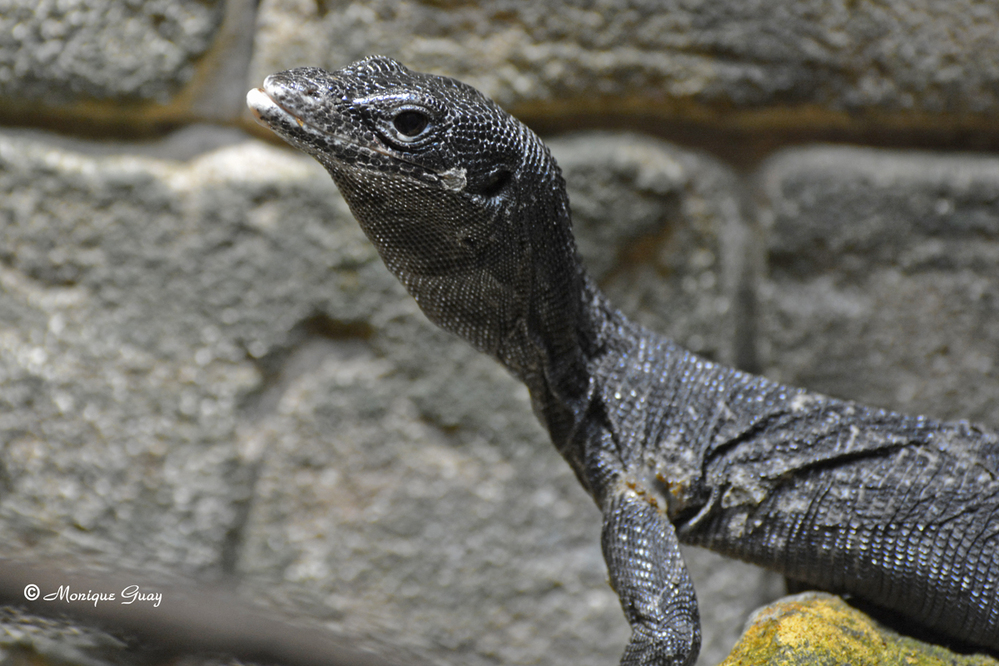 Vivarium du zoo d'Amnéville: gros plans