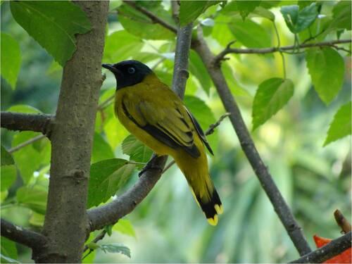 Oiseaux d'Asie