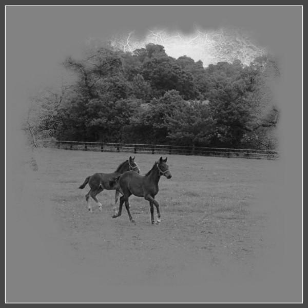 chevaux 02