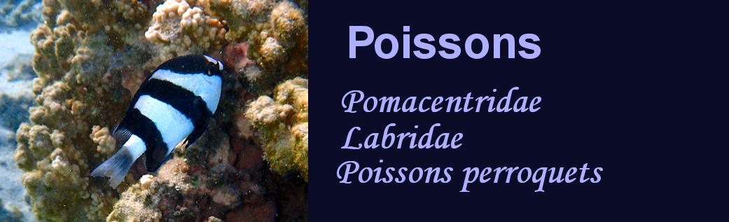 http://ekladata.com/wTdhiLJqR5V3U1ppA8uP8sCrICI/banniere-poissons-demoiselles-tropiques.png