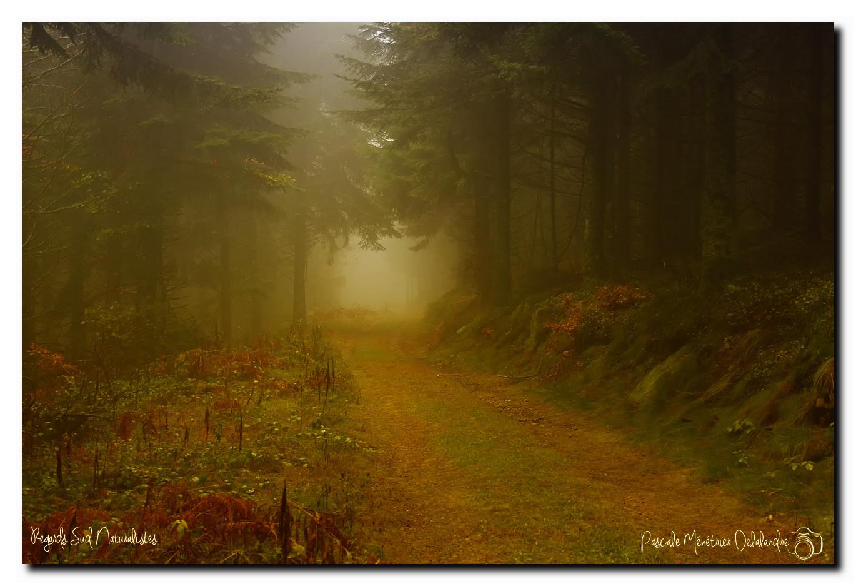 Dans la Forêt Bourbonnaise...