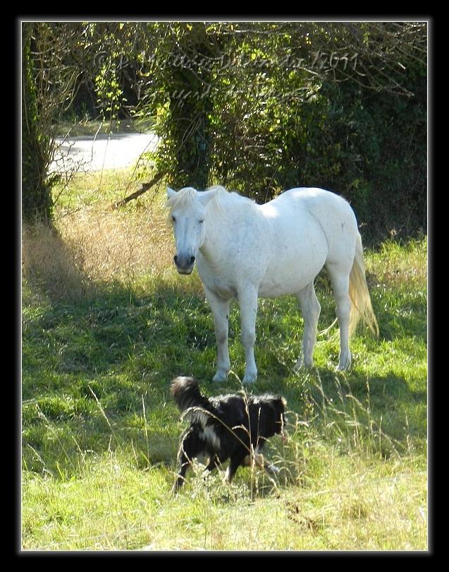 Gampo et ses amis les chevaux...