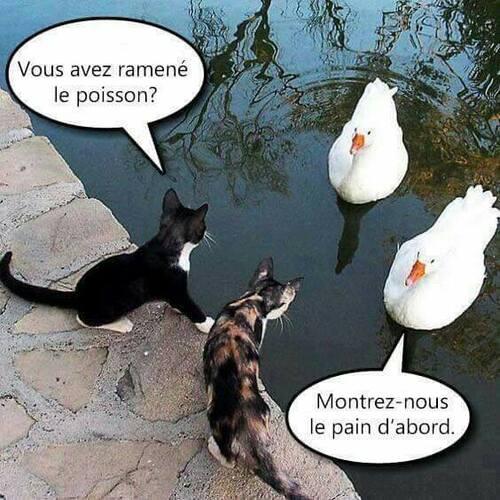 ( -*♥*-)  Rejeté par sa mère, ce chaton prématuré est un vrai miraculé !  ( -*♥*-)