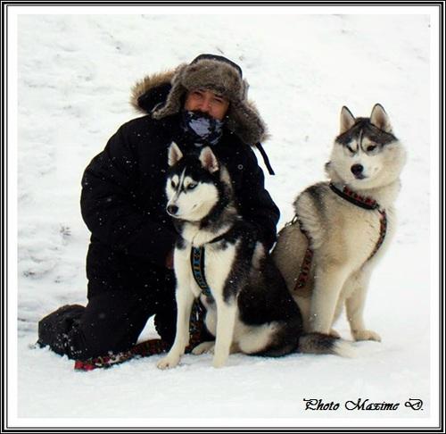 Husky des neiges (1er février 2017)