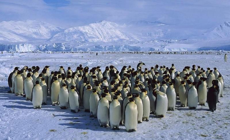 1 / PPS de la semaine : antarctica