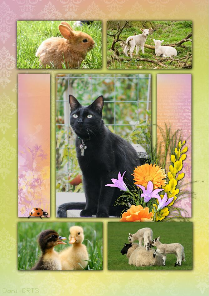 carte printemps paques chat