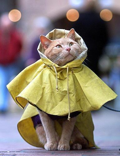 chat impermeable