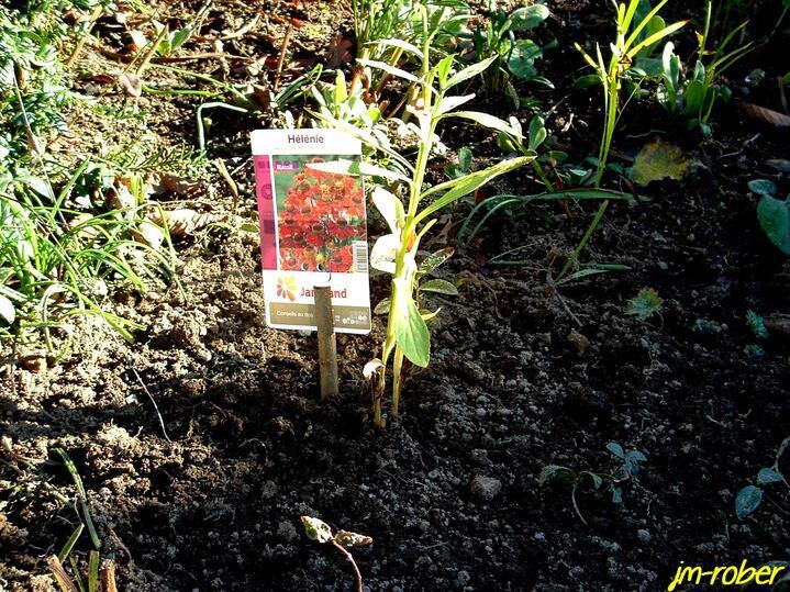 Jardin:Choisir et planter les fidéles vivaces qui conviennent au rendez-vous de la floraison