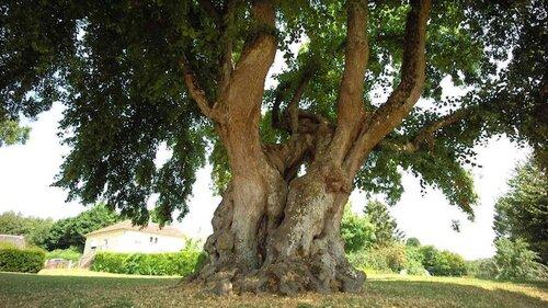 Les droits de l'arbre