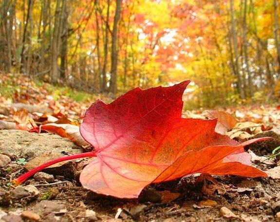 The Autumn Tag ...