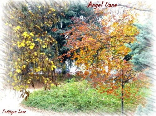 copi Angel uane3