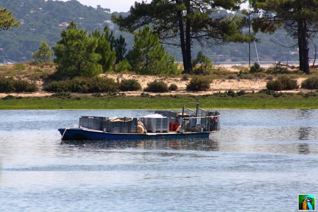 Cap - Ferret : Cabane ostréicole
