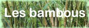 Les Bambous - Galerie photo