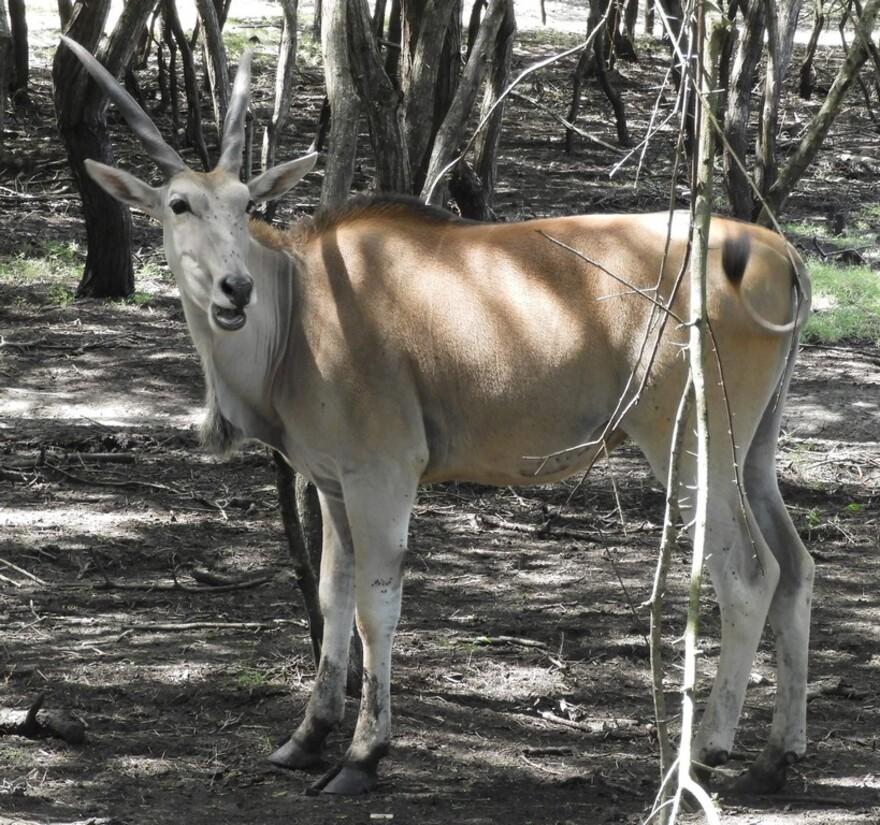 25/7/19 : Île Maurice : Casela parc zoologique (4/6)
