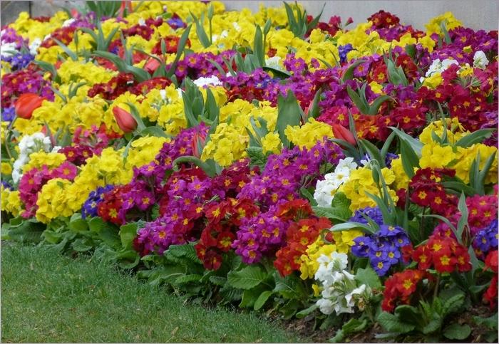 Floraison au parc