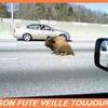 bison futé.jpg