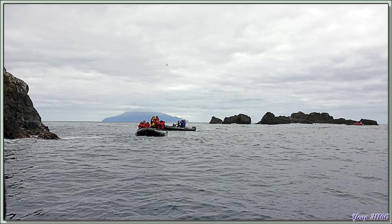 L'île Tristan da Cunha vue de Pequena Point - Nightingale Island - Tristan da Cunha