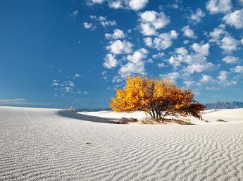 White Sand ...