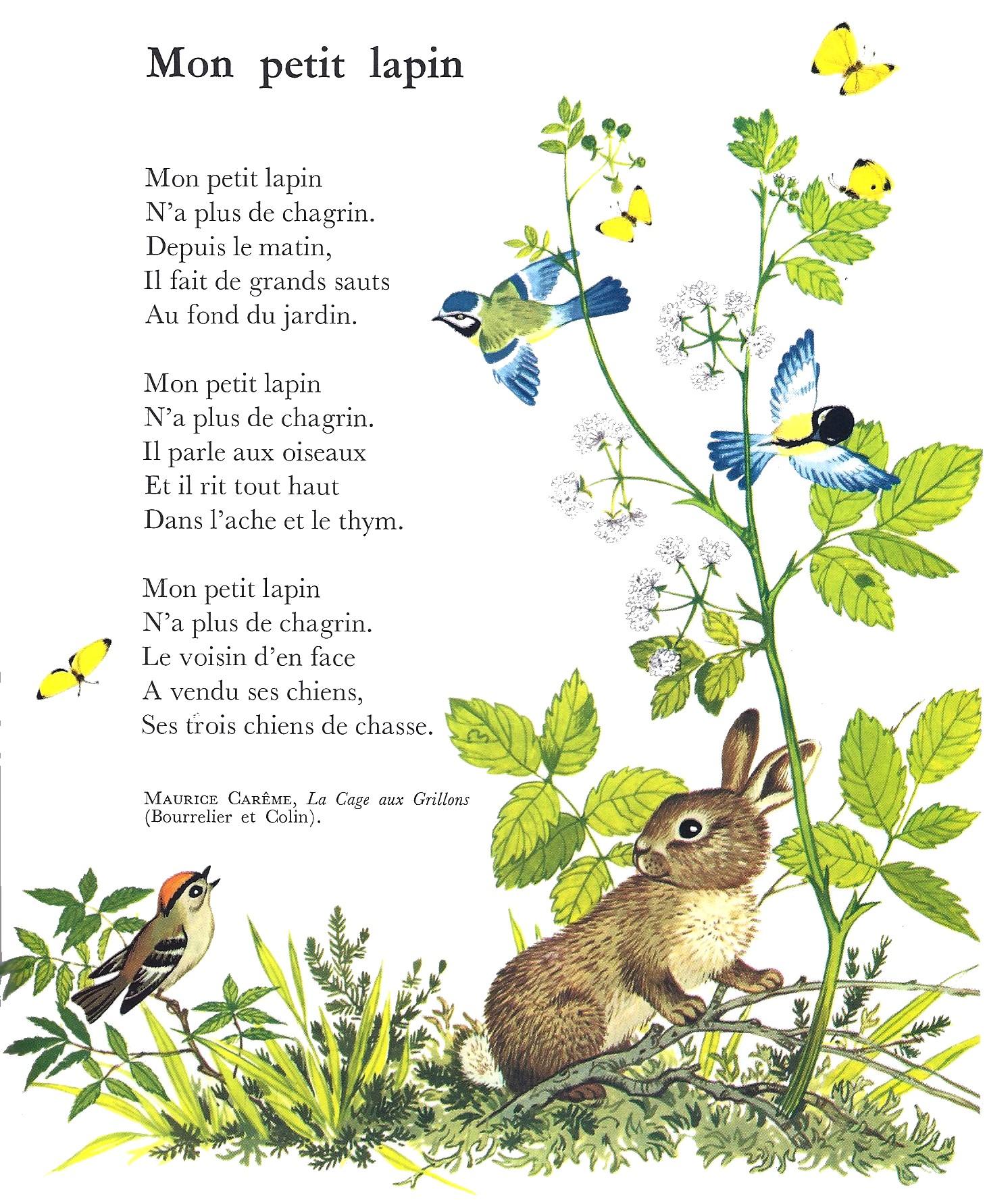 Maurice Carême Mon Petit Lapin Littérature Au Primaire