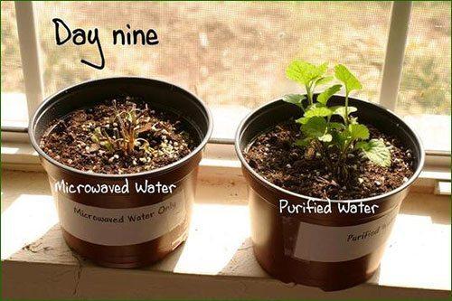 _micro-ondes-plante-3
