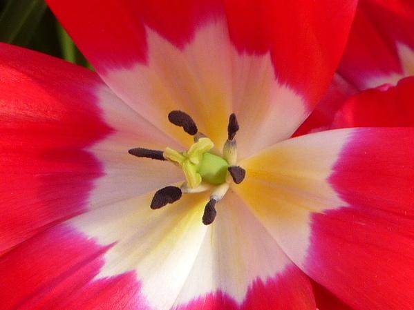 les Fleurs d'ANNE .L
