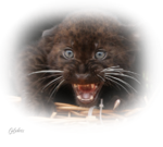 leopard noir.png