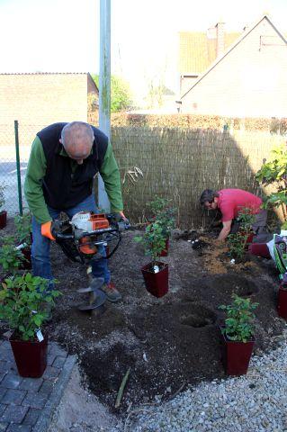 Belle journée pour planter...300 rosiers !