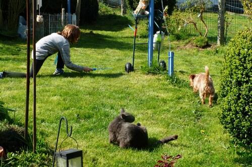 Tranches de pelouse