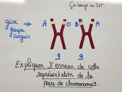 Concours 3ème : les chromosomes