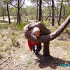 Figueira da Foz  - les arbres biscornus