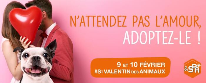"""La SPA fête la """"Saint-Valentin des Animaux"""" ce week-end"""