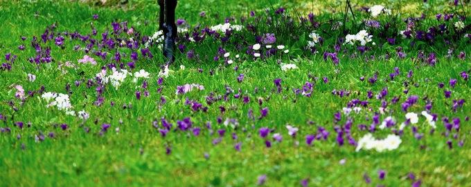 Deux sous d' violettes !
