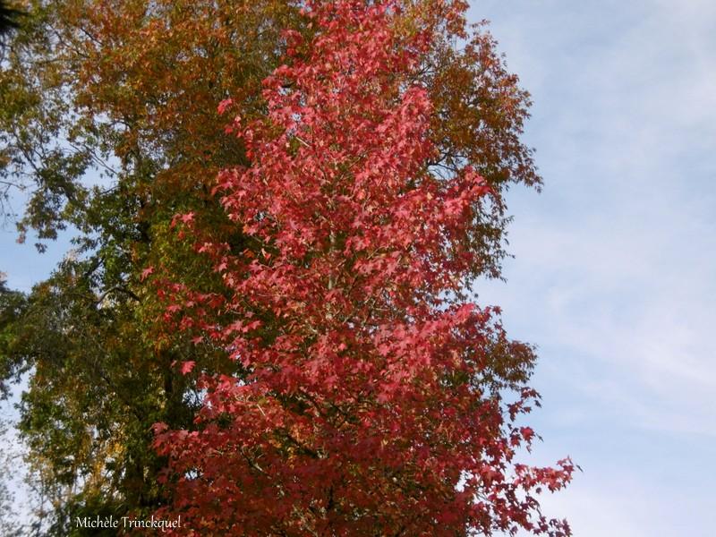 """Une balade """"au bout de ma rue"""", le 26 octobre (suite)..."""