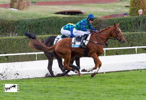 Prix Maurice Gillois (Grand Steeple-Chase des 4 Ans Le Parisien)