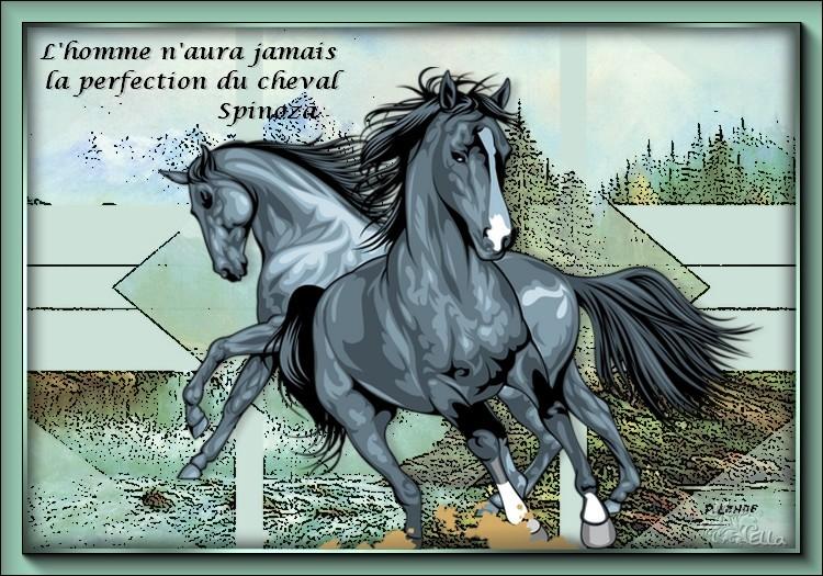 la beauté du cheval