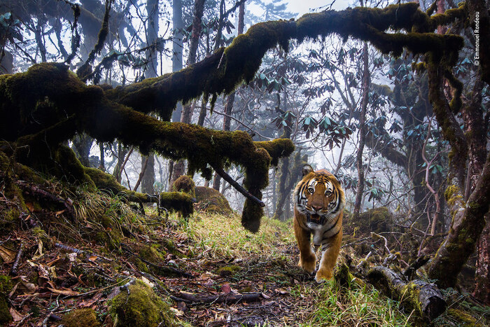 Stunning Highly Commended Photos of the 2018 Wildlife Photographer of the Year Contest By Emma Taggart on September 6, 2018